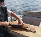Fish can be prepared on the deck of the boat on this north Iceland tour to the island Hrísey.