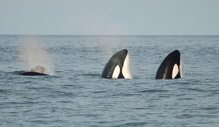 西人岛周边小岛1小时船游 大象石+岩洞+海鹦+鲸鱼