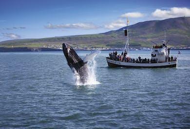 Husavik Original Whale Watching Adventure