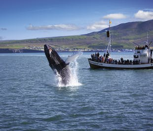 Husavik Original Whale Watching Adventure