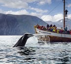The Húsavík Original Whale Watching tour is conducted on a traditional Icelandic oak boat.