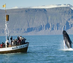 Husavik Original Whale Watching | Carbon Neutral Tour