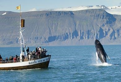 ดูวาฬที่ฮูสาวิกแบบดั้งเดิม | ทัวร์การเป็นกลางคาร์บอน