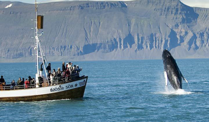 Den originale hvalsafari fra Húsavík | CO2-neutral udflugt