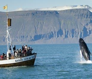 Китовое сафари в Хусавике | Углеродно-нейтральный тур
