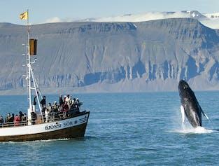 Húsavík Original Whale Watching - Carbon Neutral!