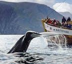 Una ballena jorobada se eleva mientras se zambulle en los mares del norte de Islandia.
