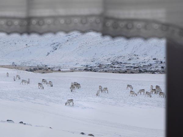 Wilderness Center of Iceland
