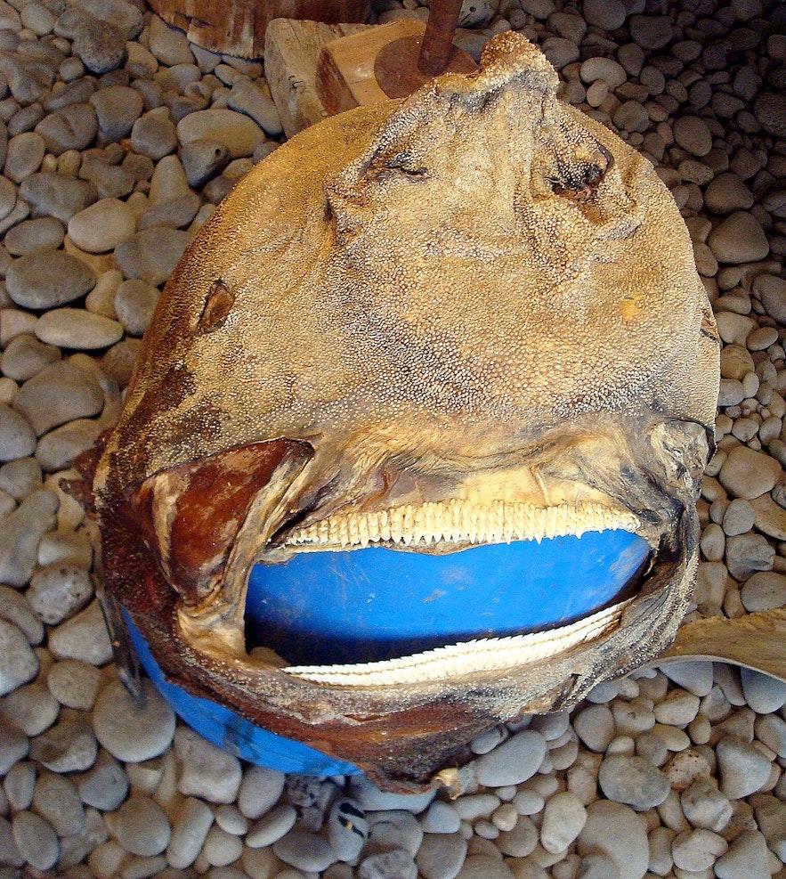 Inside the Shark Museum Hákarlasafnið at Snæfellsnes