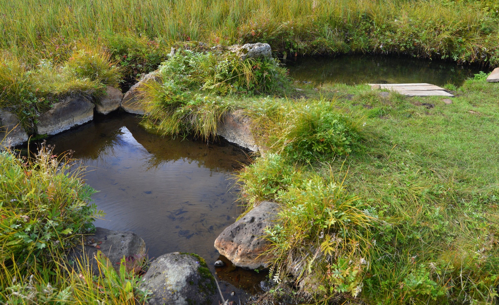 A Visit to Haukadalsskogur Forest with a Dip in Kualaug Hot Pool