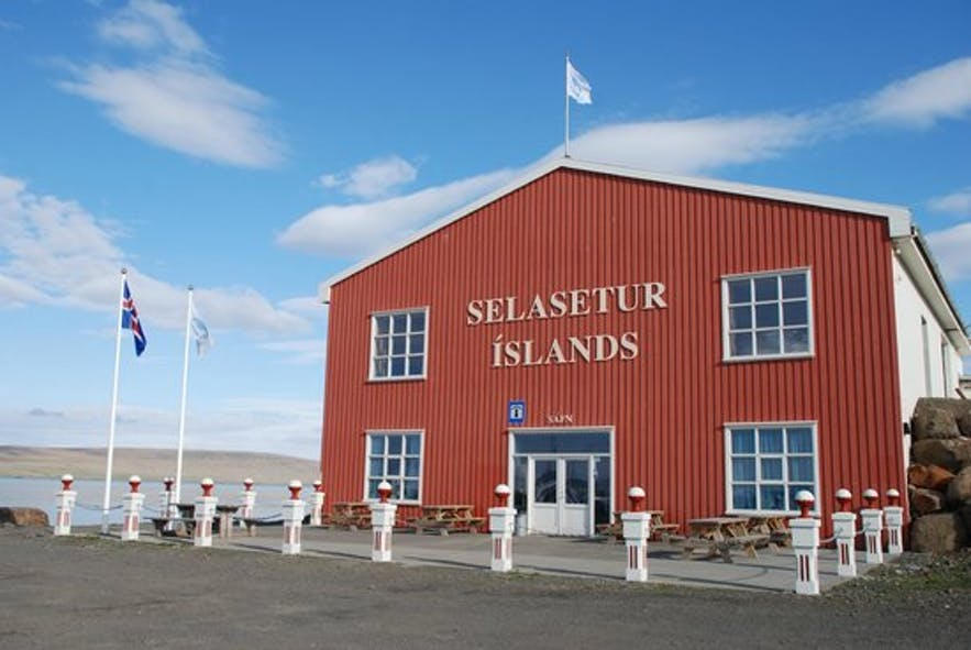 The Icelandic Seal Centre has a fascinating museum, and is the pioneer of seal research in Iceland.