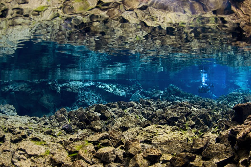 水中の視界は100mにもなる