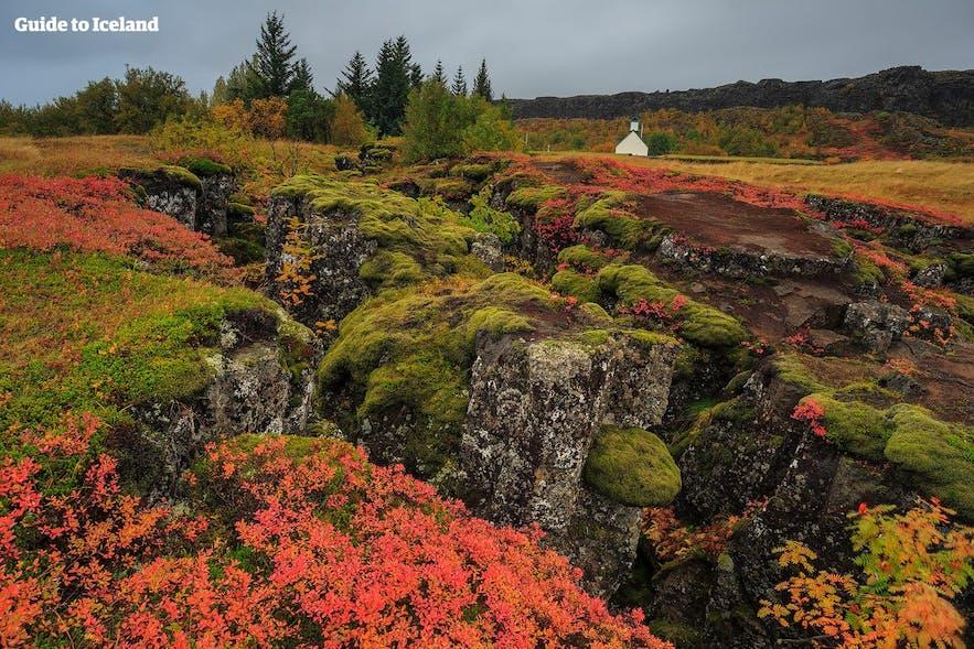 Þingvellir nationalpark på Island är ljuvligt vacker under hösten.