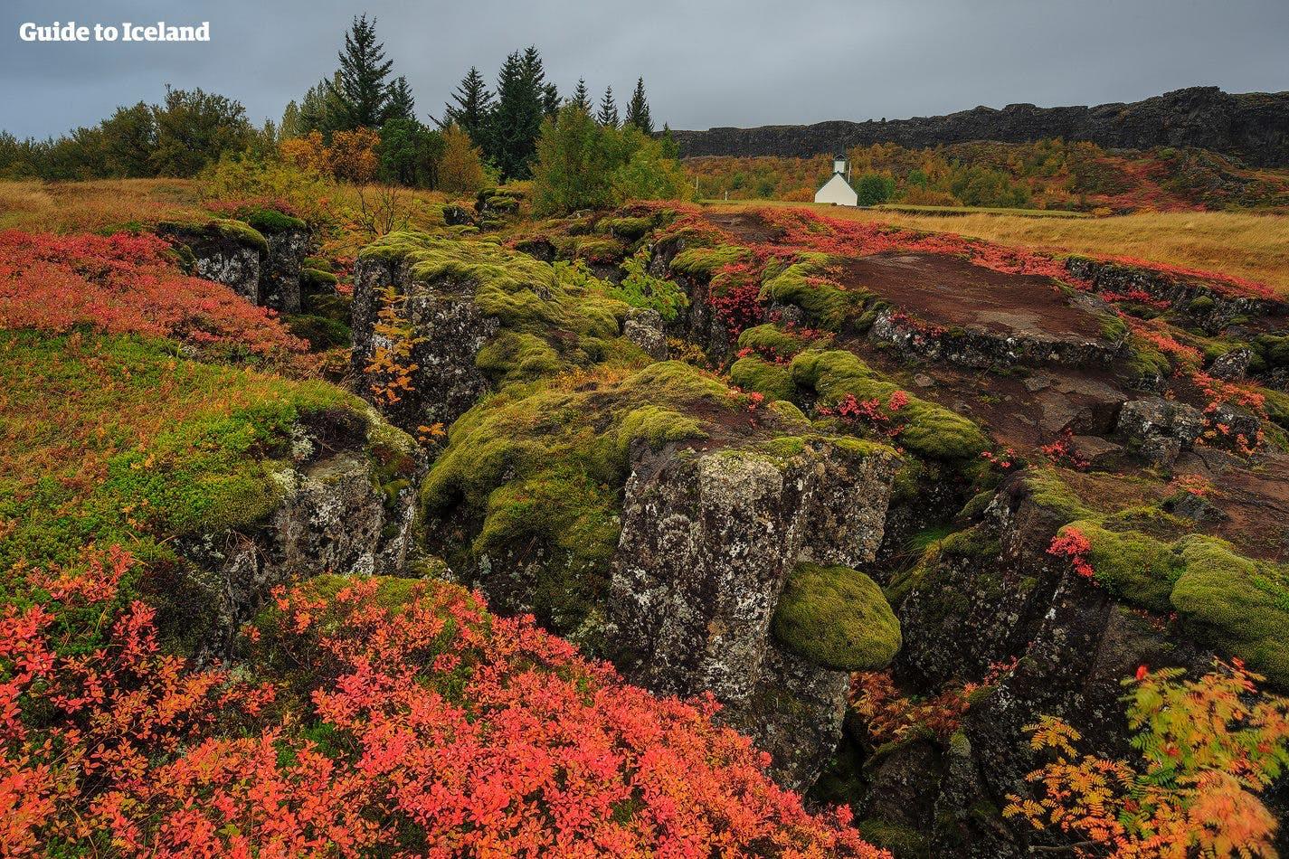 Þingvellir National Park during autumn