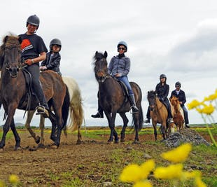 Horseback Riding & Whale Watching from Reykjavik