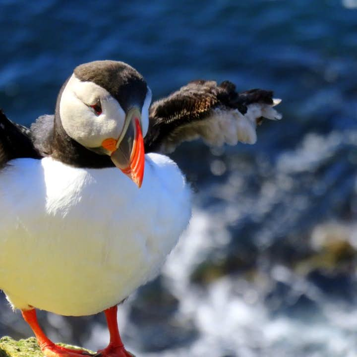 夏季西峡湾两日游:欧洲最西端观海鹦+丁坚地瀑布+峡湾风光|含雷克雅未克往返航班
