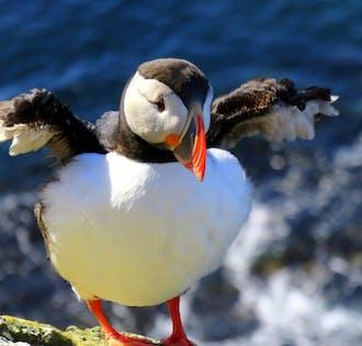 2-tägige Sommer-Tour in den Westfjorden | mit Flügen ab Reykjavík