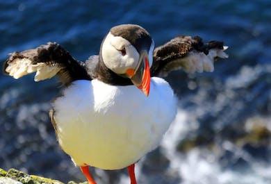 Выходные в Западных фьордах | 2-дневный летний тур с перелетом из Рейкьявика