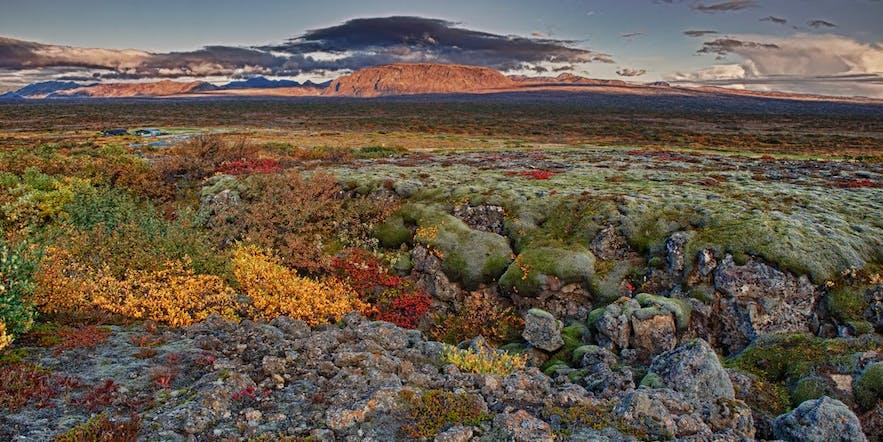 Þingvellir National Park in its autumn colours