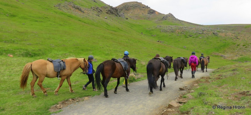 Horses on the trail to Reykjadalur