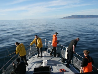 Sea angling from Reykjavik | Keep your own catch