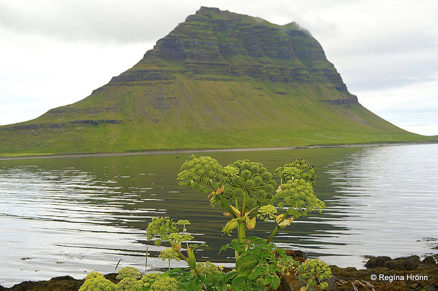 Is This Most Photographed Sign In >> Mt Kirkjufell Kirkjufellsfoss In Grundarfjordur The Most