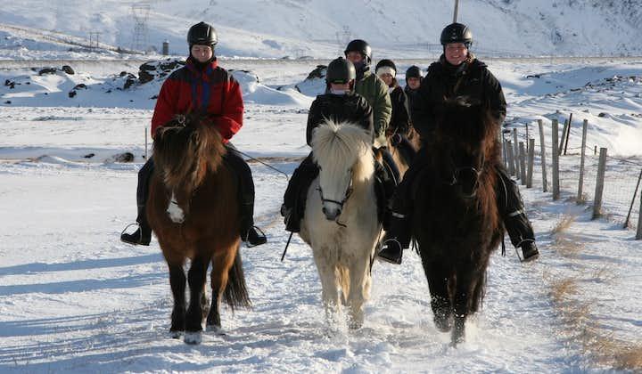 2-stündige Reittour | Natur und Kultur, ab Reykjavík