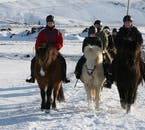 The bitter cold of Iceland's winters is no issue to the Icelandic Horse.