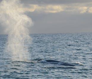 Whale Watching in Akureyri & Reykjavík | Two Port Ticket