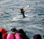 Whale Watching in Akureyri & Reykjavík