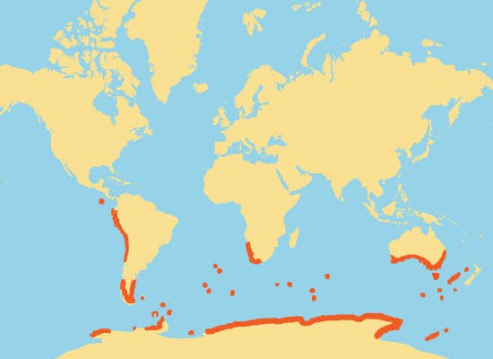 This is where penguins live in the world