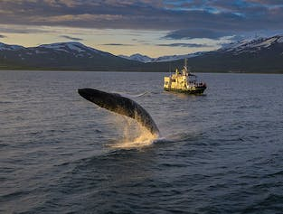 Whale Watching Tour from Akureyri
