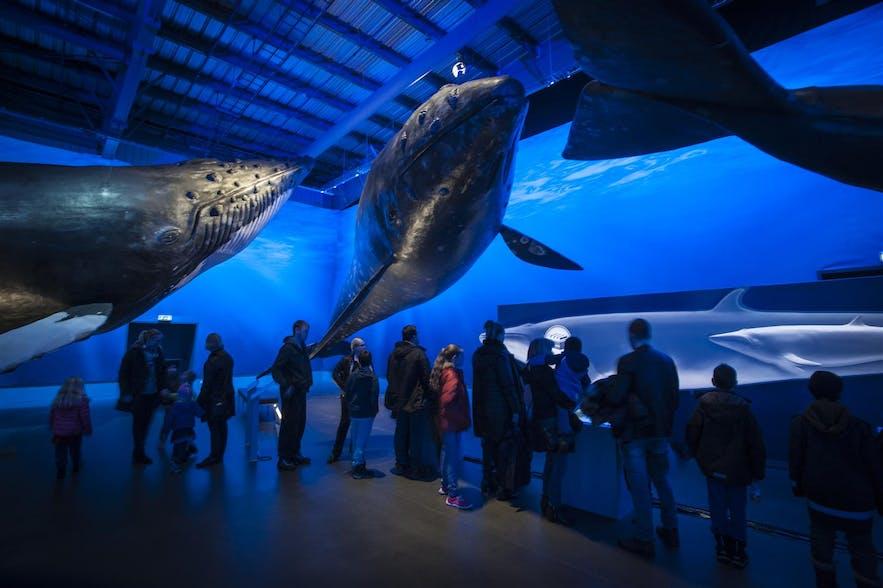 가족 모두가 즐겁고 흥미롭게 관람할 수 있는 아이슬란드 고래 박물관