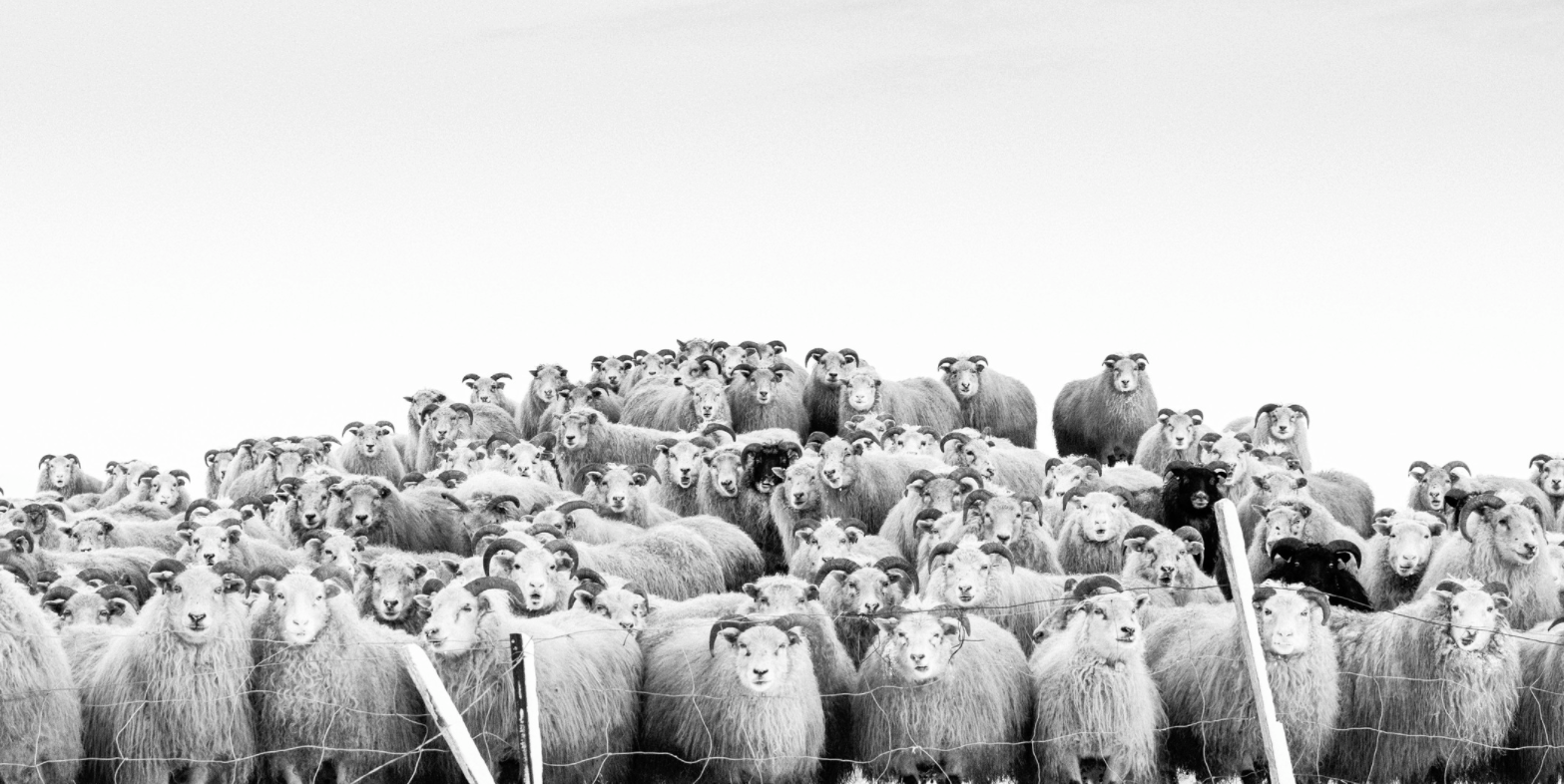 The photos on display in Fótógrafí capture moments that reflect daily life in Iceland.