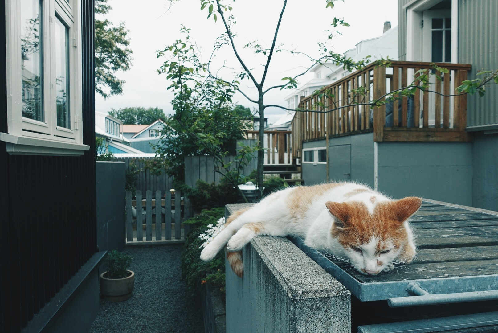 A cat lounging around in downtown Reykjavik,