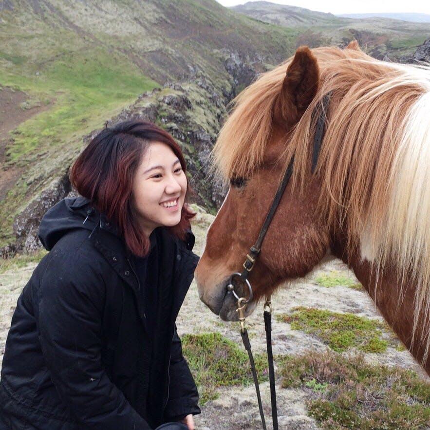冰島馬與我