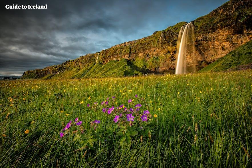 누구인들 아이슬란드에서 캠핑을 거절할까요?