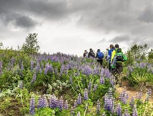 Laugavegur Trek | 4-Day Hiking & Mountain Huts Tour