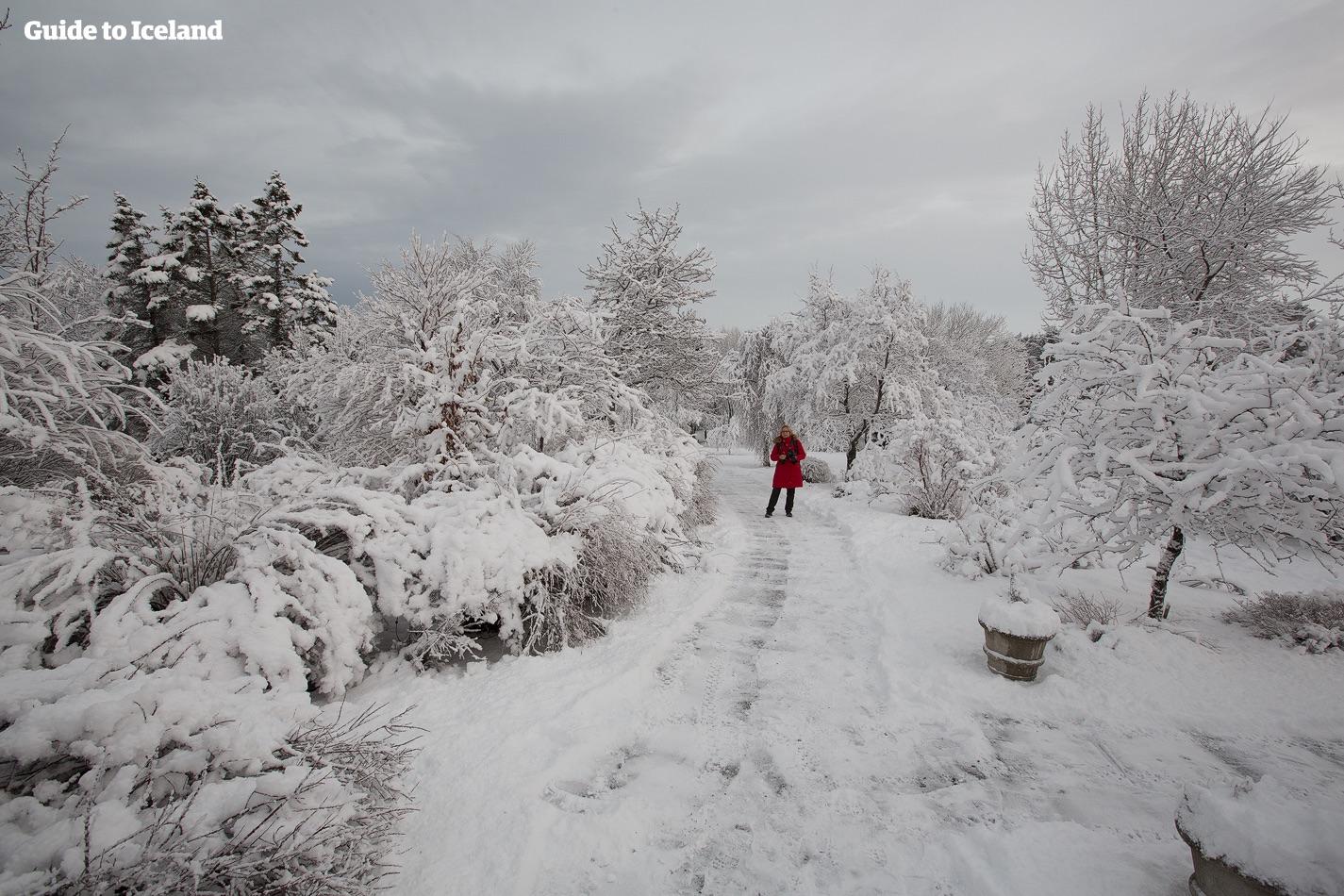 Island dekket av snø er et vidunderlig vinterlandskap.