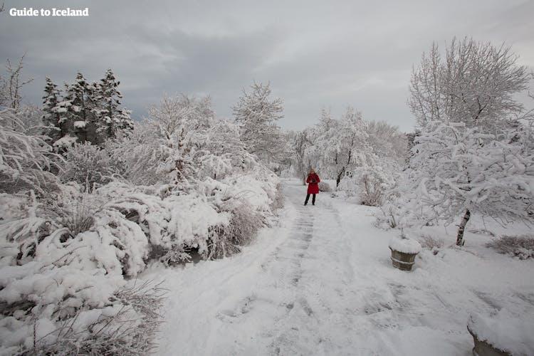 Islandia se convierte en el país de las maravillas del invierno cuando está cubierto de nieve.