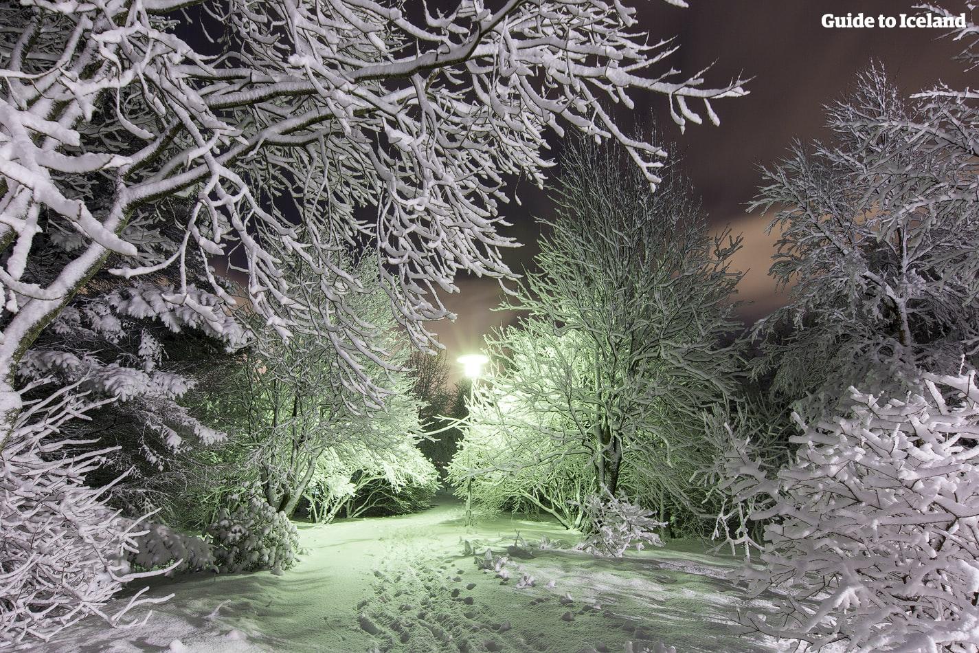 หิมะห่อหุ้มกิ่งก้านของต้นไม้ในกลางฤดูหนาวที่เรคยาวิก