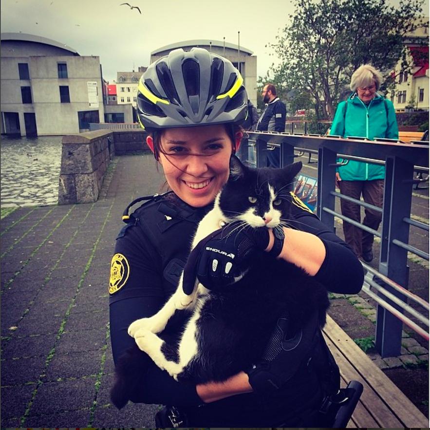 冰島女警找貓