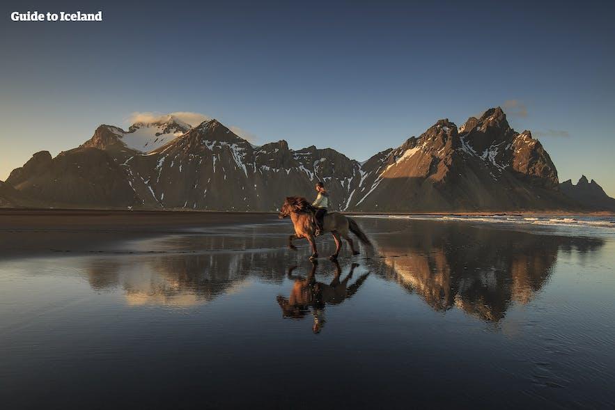 ヴェストラホルヌ(Vestrarhorn)の山を背景に撮影されたアイスランドの馬