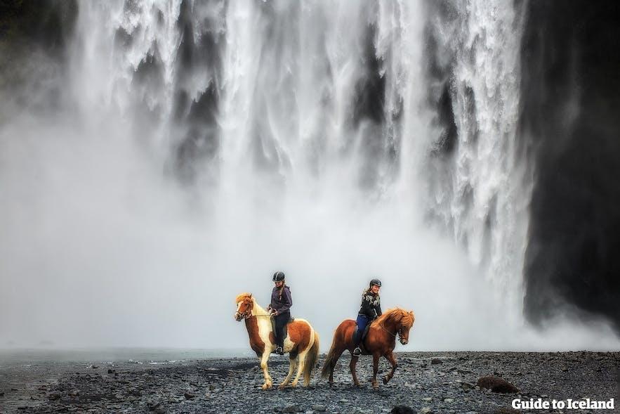 スコゥガフォスの滝の前にいるアイスランドの馬