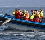 Husavik whale and puffin safari | RIB boat adventure
