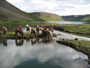 Balade à cheval dans le fjord Skjaldarvik | Départ d'Akureyri