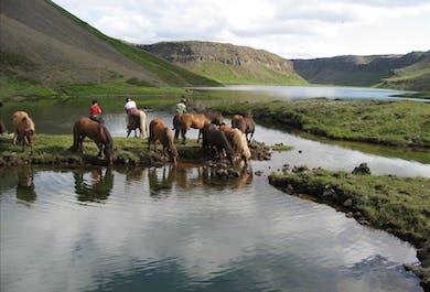 アークレイリ発|フィヨルド景観が楽しめる乗馬ツアー(複数回出発)
