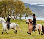 On the Horseback Riding around Skjaldarvík Fjord you'll be paired with a horse that matches your character and your abilities.