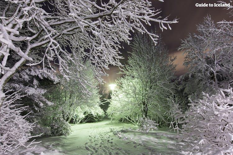 Die Gegend von Laugardalur in der Hauptstadt Reykjavik ist ein wunderschöner Ort, aber wenn er im Winter mit Schnee bedeckt ist, hat er einen besonderen Zauber.