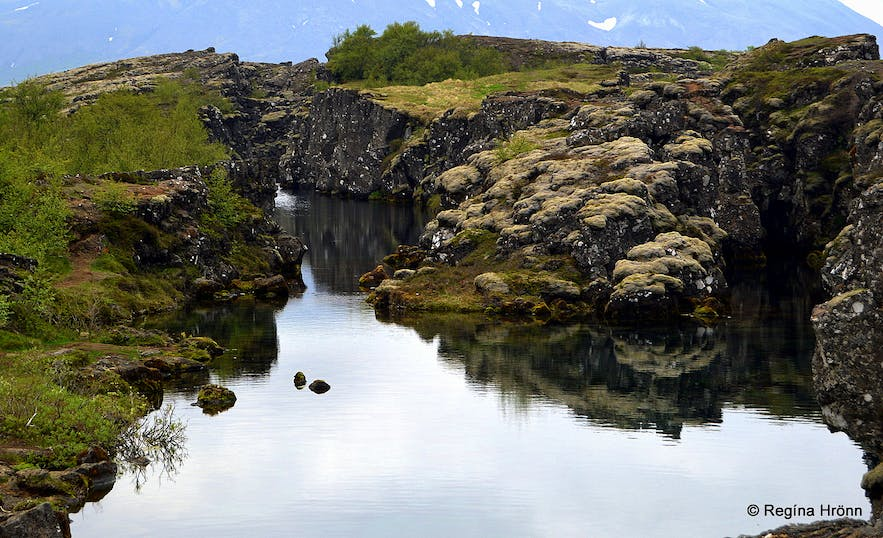 The Secret Cabin of Thor hidden in the Woods of South-Iceland